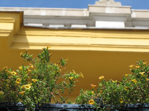 Yellow flowers, ochre walls, blue skies